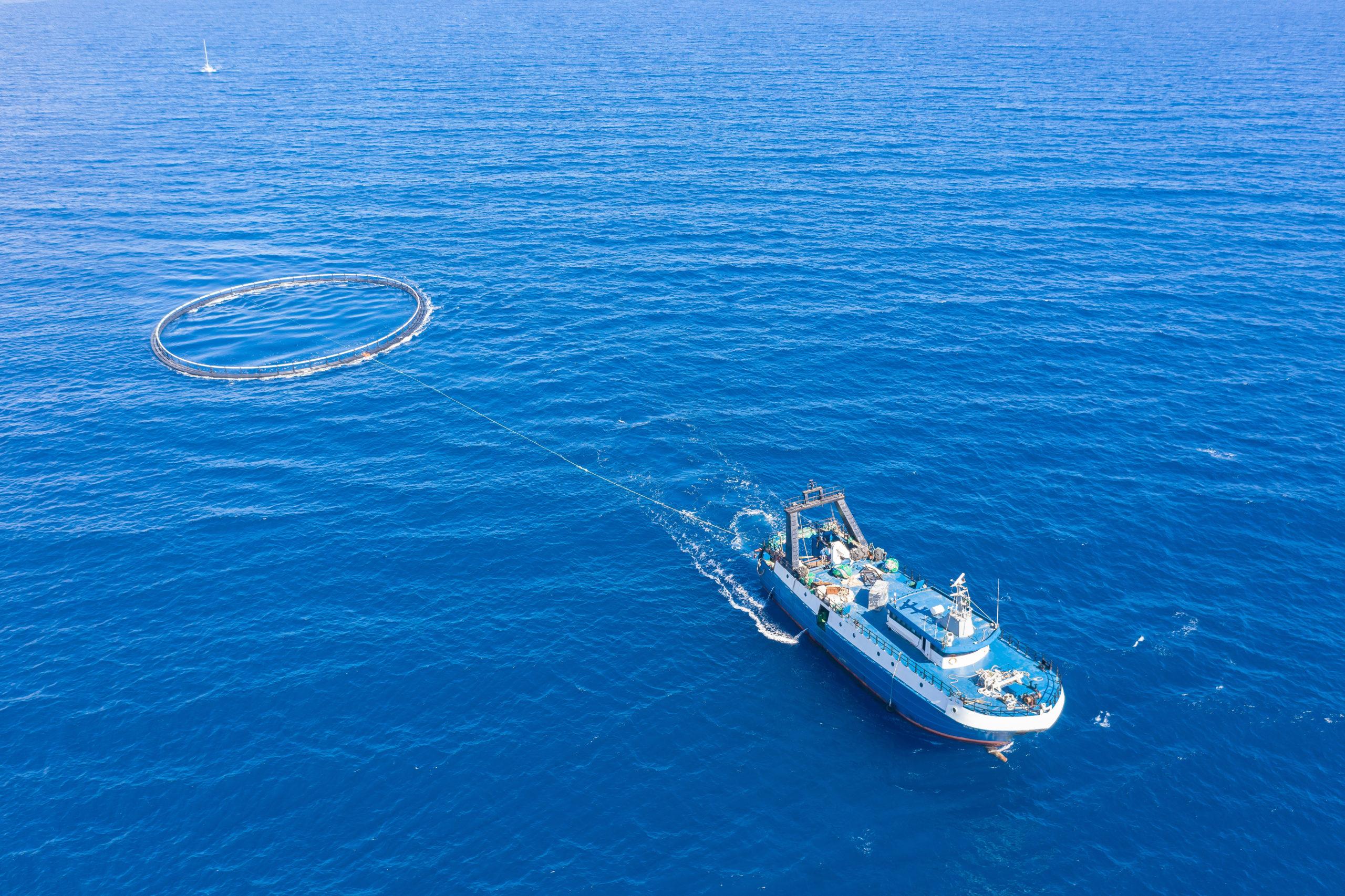 Jaulas de transporte de diferentes medidas para piscifactorias